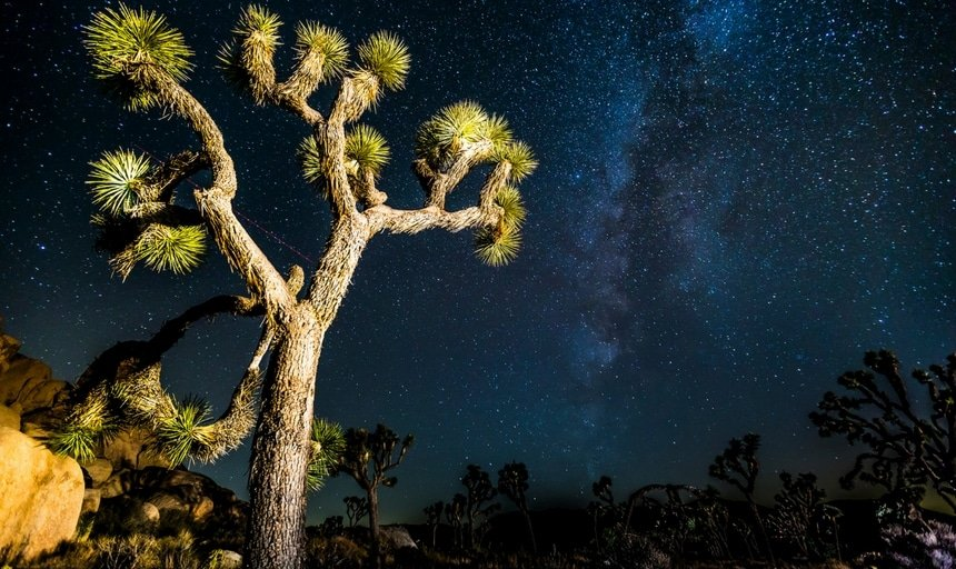 Joshua Tree on a starry night
