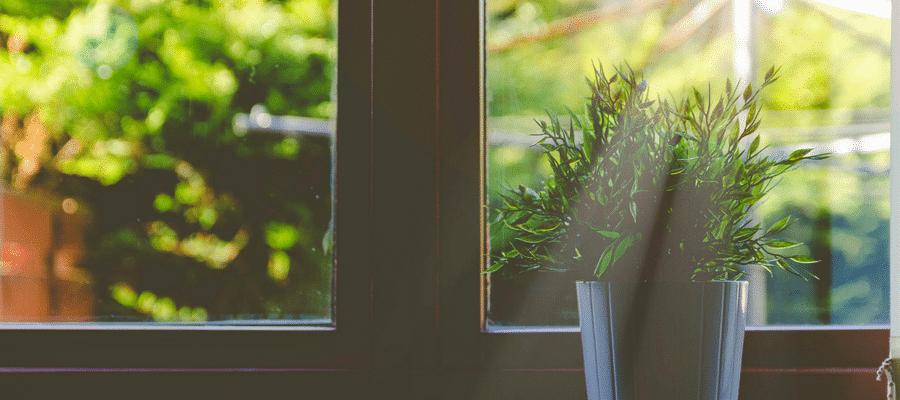 Plant on window ledge