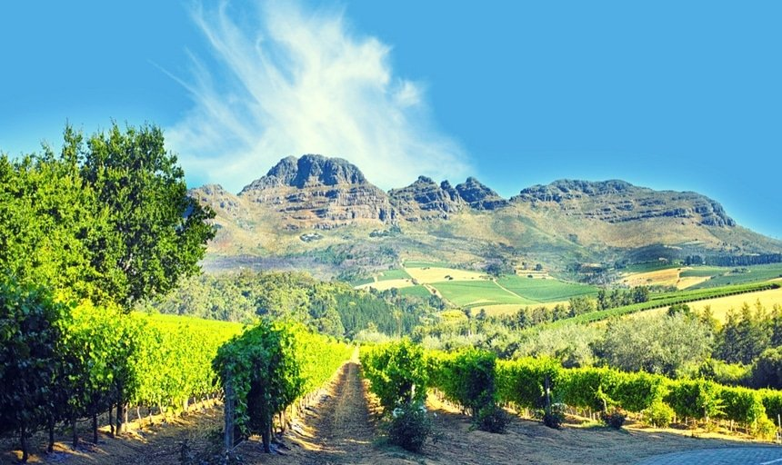 Wine fields near Stellenbosch, Western Cape, South Africa