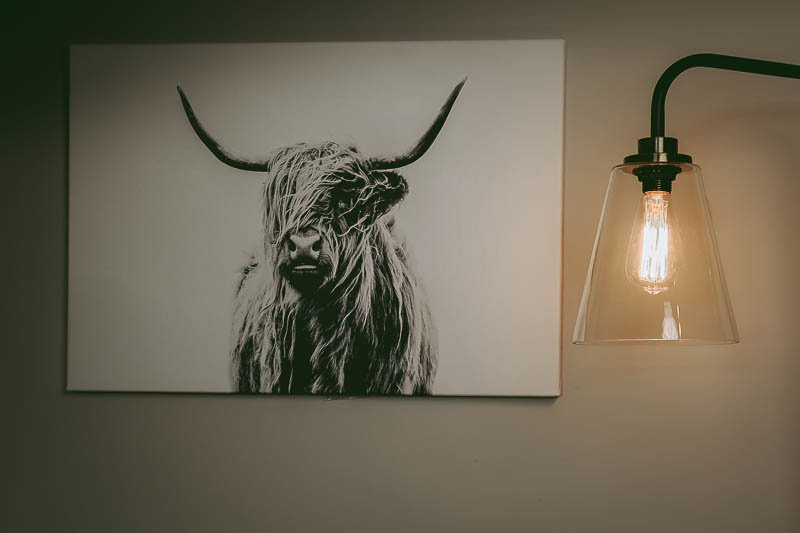 Apt 2b portrait of a highland cow in office