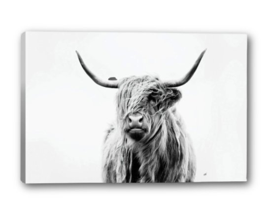 Portrait of a Highland Cow from Apt2B